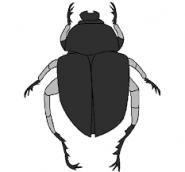 Fiabe della buonanotte: L'aquila e lo scarabeo